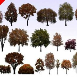 دانلود عکس png درخت – آبجکت پست پروداکشن