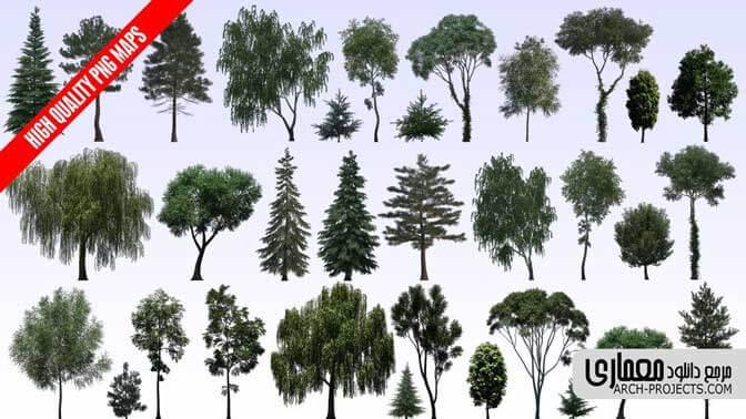 فایل png درخت