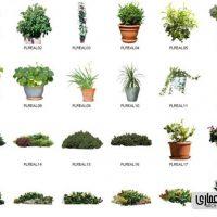 عکس png گل و گیاه