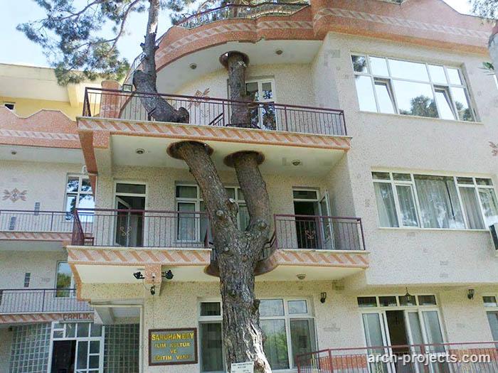 استفاده از درختان در معماری