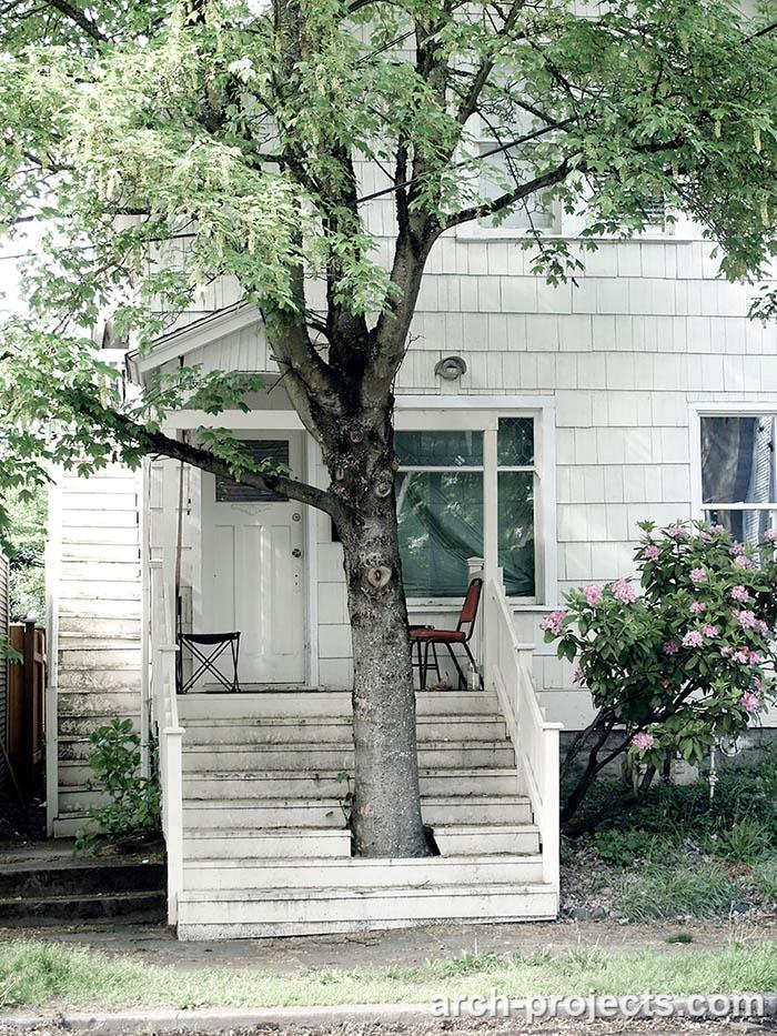 حفظ درختان در ساخت خانه