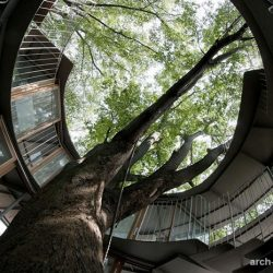 ایده های تعامل با طبیعت در معماری