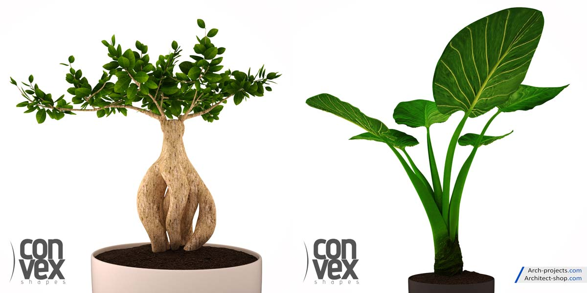 مدل سه بعدی گیاهان گلدانی
