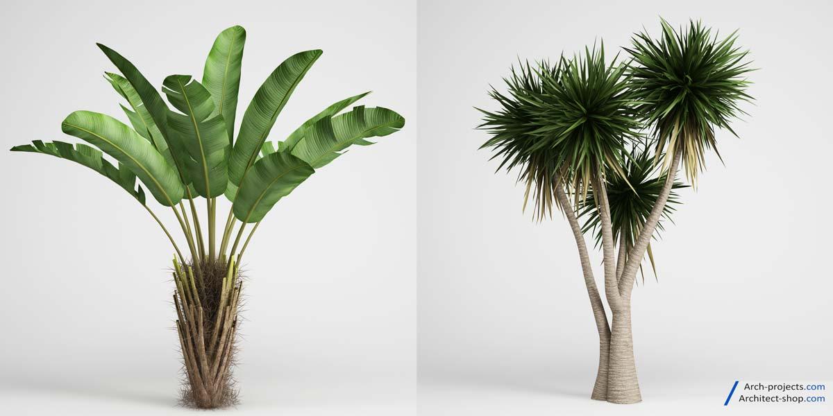 مدل سه بعدی درختهای گرمسیری