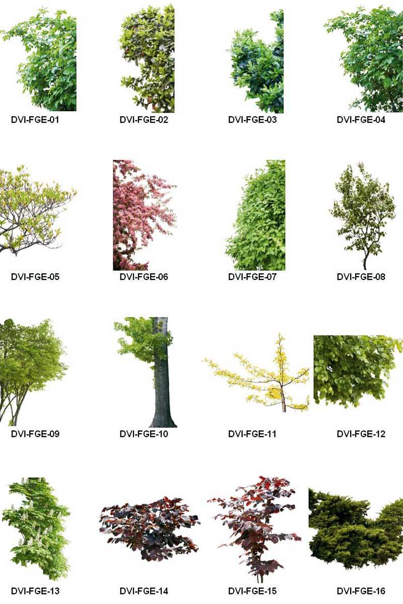 عکس درخت از نمای نزدیک