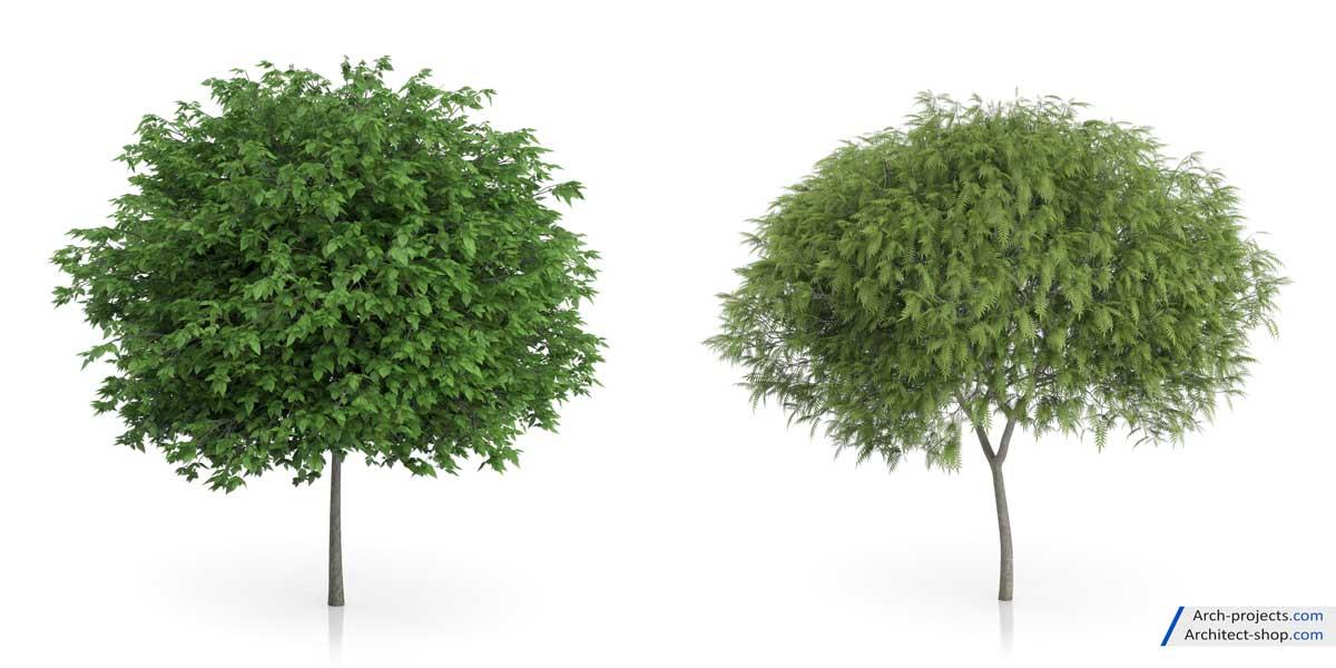 دانلود مدل سه بعدی درخت