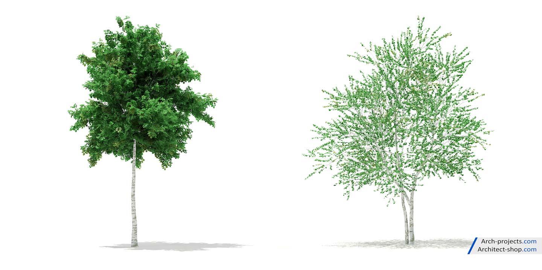 مدل سه بعدی درخت زینتی