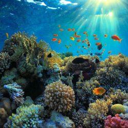 دانلود تصاویر HDRI دریا و زیر آب