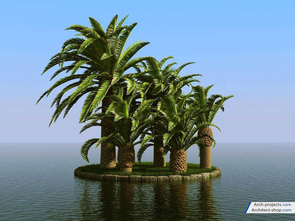 مدل سه بعدی درخت نخل