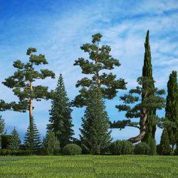 آبجکت درخت از 3DMentor