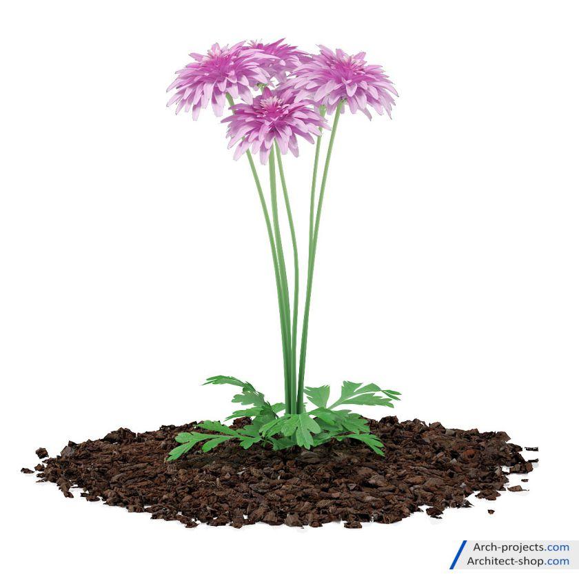 آبجکت گیاهان باغچه