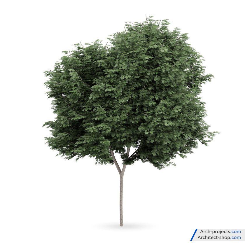 دانلود مجموعه آبجکت درخت