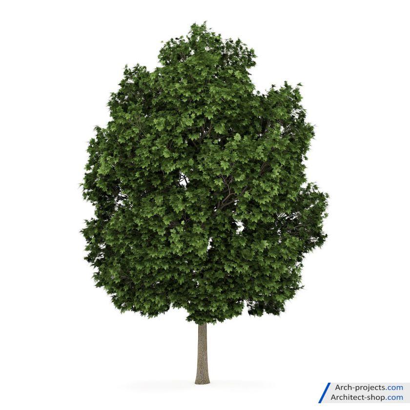 دانلود آبجکت درخت