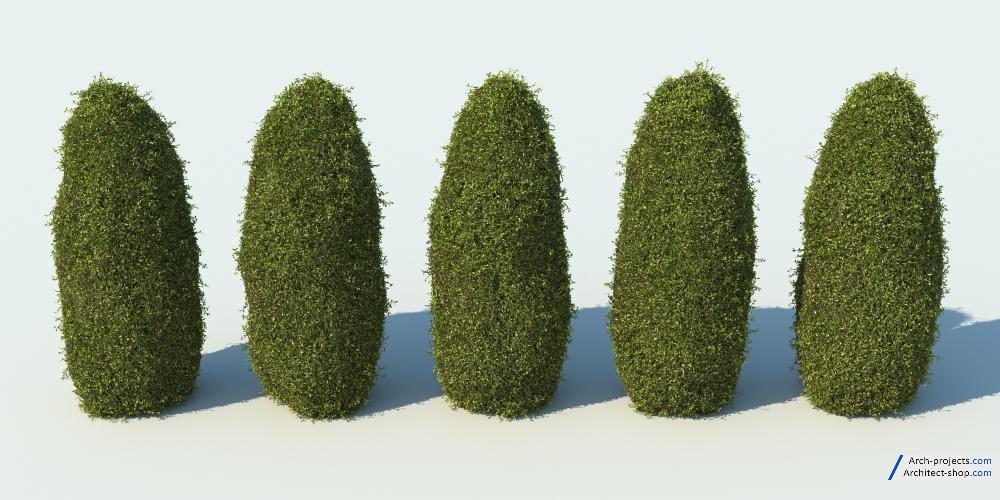 آبجکتبوته و درختچه تزئینی