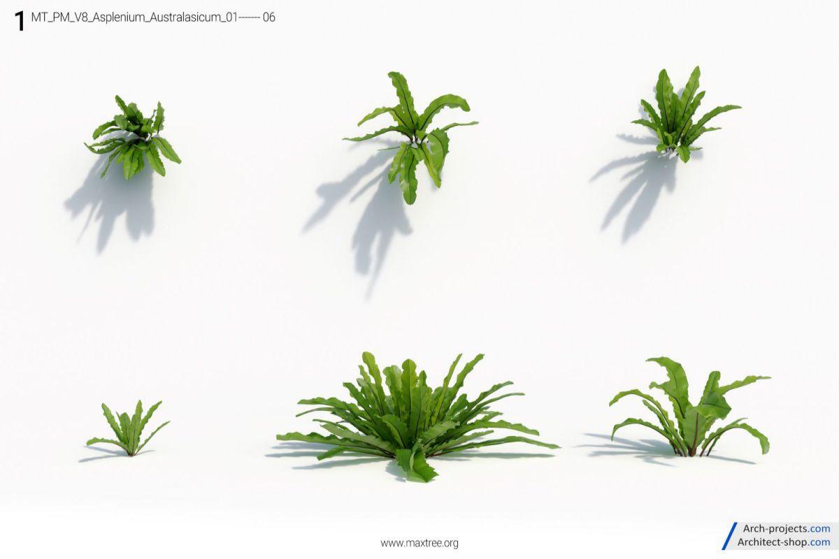 مدل سه بعدی درخت و گیاه