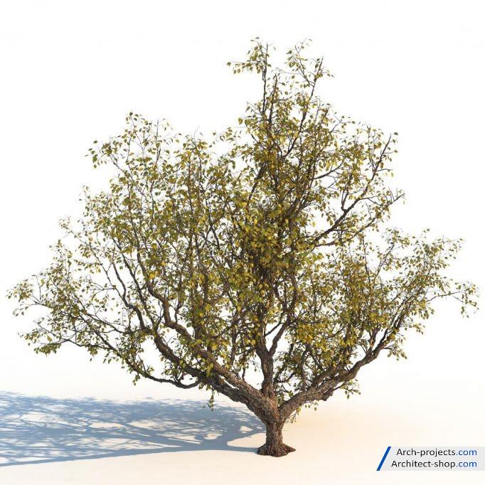 آبجکت درخت پاییزی
