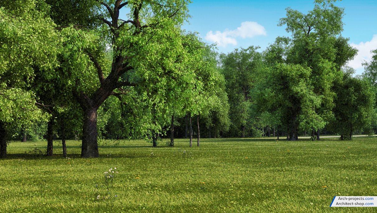 مدل سه بعدی درخت تابستانی