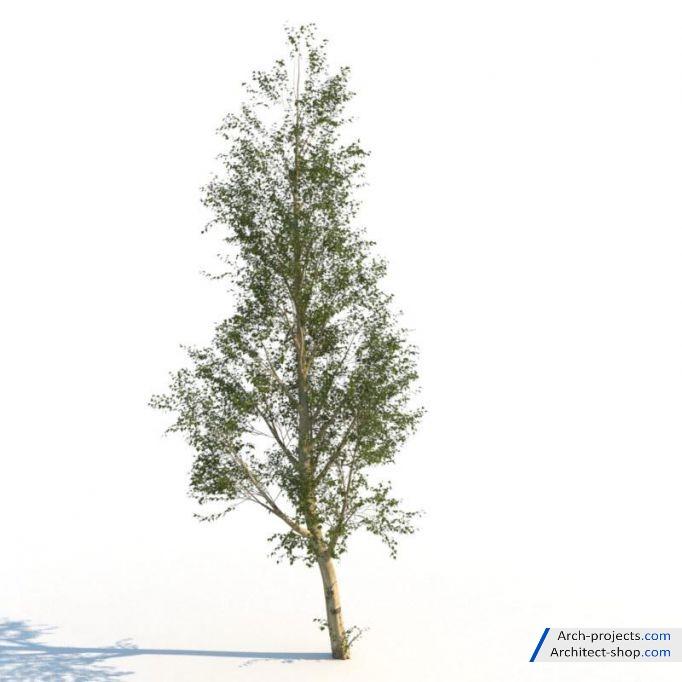 آبجکت درخت تابستانی