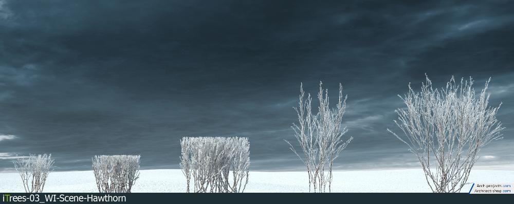 مدل سه بعدی درخت زمستانی