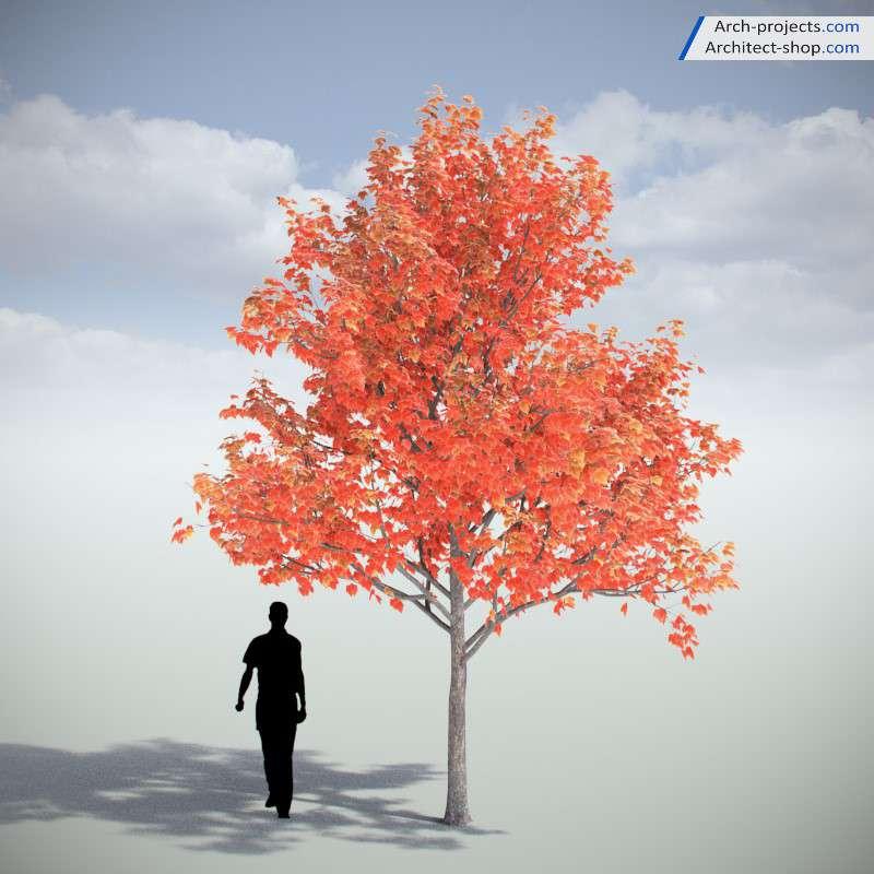 دانلود مدل سه بعدی درخت واقعی