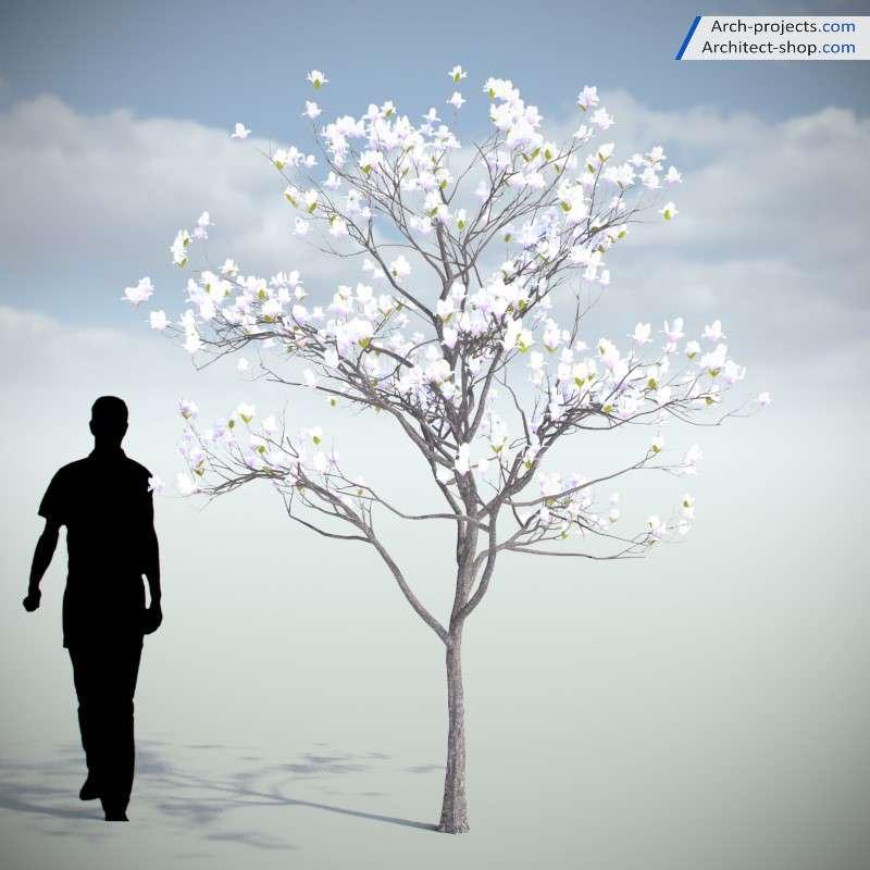 مدل سه بعدی درخت بهاری