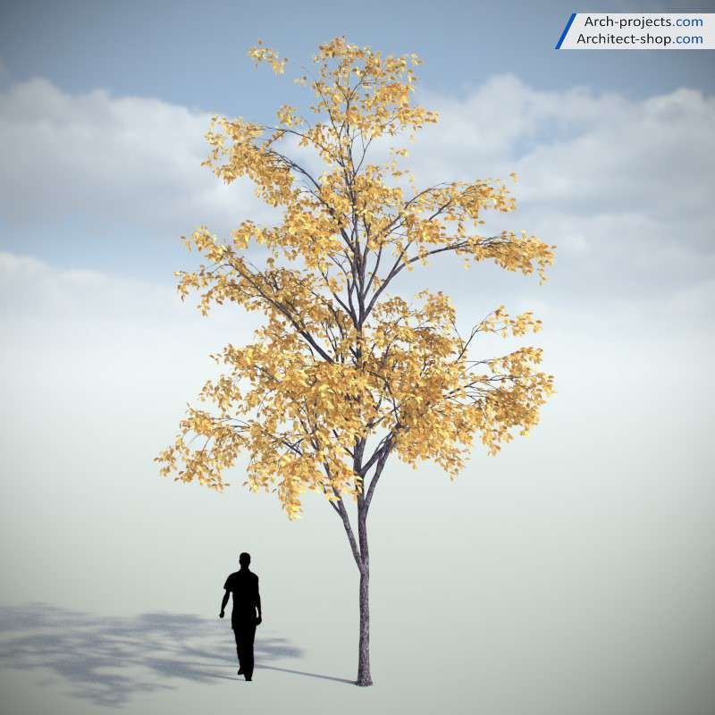 مدل سه بعدی درخت پاییز