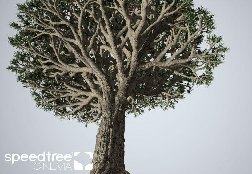 نرم افزار مدل سازی درخت