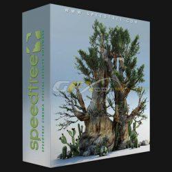 دانلود SpeedTree Cinema – نرم افزار مدل سازی درخت و پوشش گیاهی