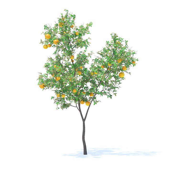 دانلود مدل سه بعدی درختان میوه