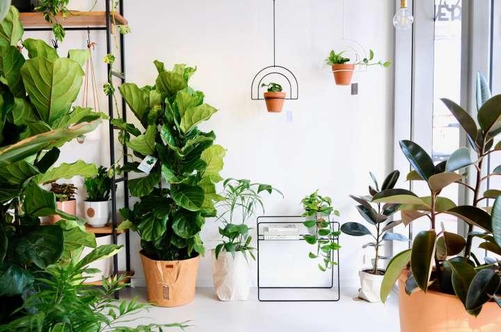 دکوراسیون داخلی فروشگاه گل و گیاه