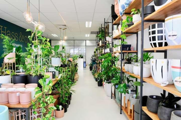 دکوراسیون داخلی فروشگاه گیاهان دارویی