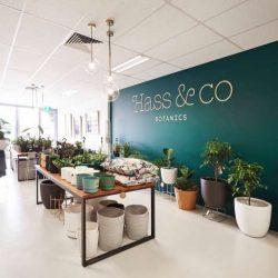 طراحی داخلی فروشگاه گیاهان دارویی