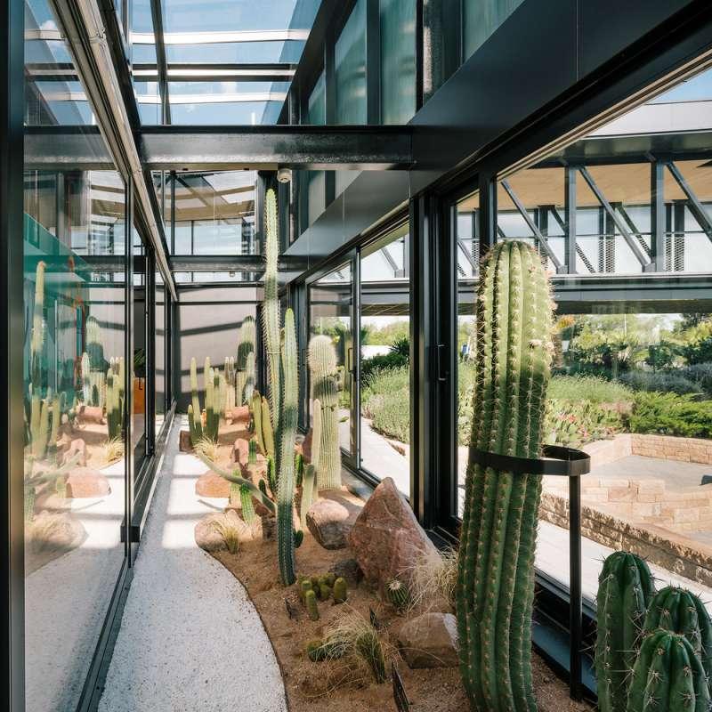 طراحی شهر بیابانی برای کاکتوس ها