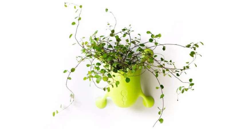 خلاقیت در طراحی گلدان