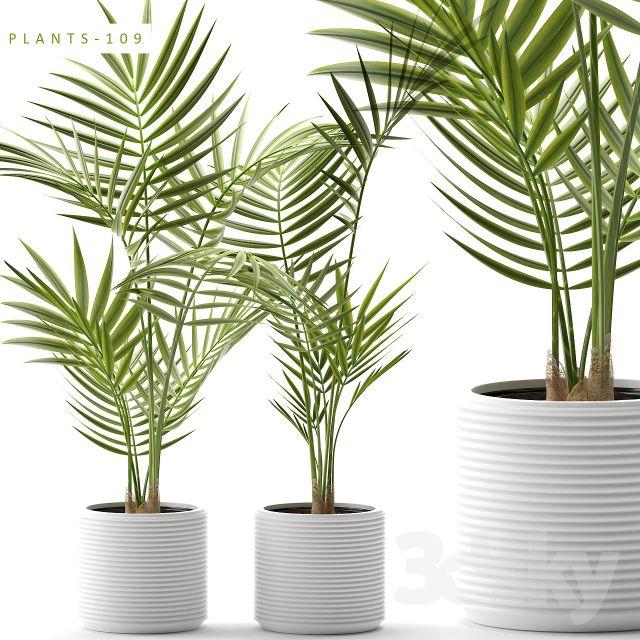 آبجکت گیاهان زینتی و آپارتمانی