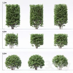 دانلود مجموعه مدل سه بعدی گیاه گلدانی، زینتی و آپارتمانی
