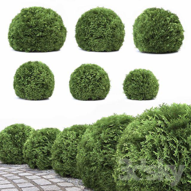 مدل سه بعدی پرچین گیاهی
