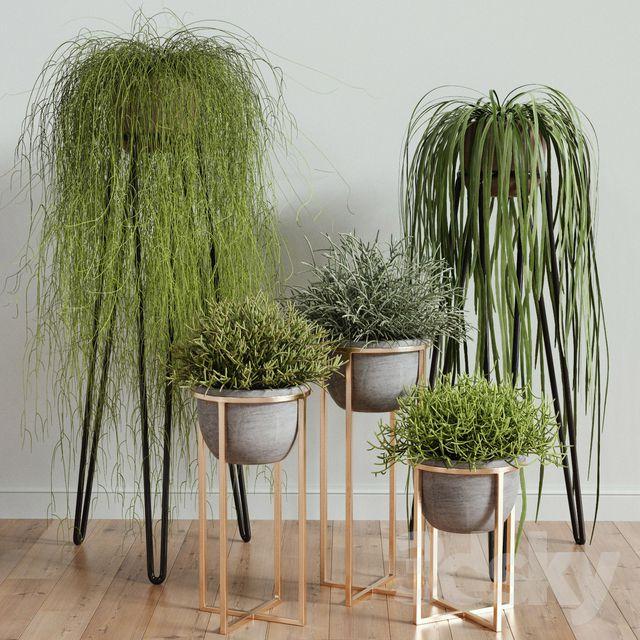 آبجکت گیاهان گلدانی