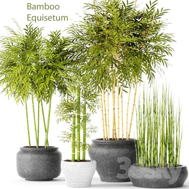 آبجکت گیاهان تزیینی