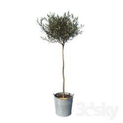 دانلود مجموعه آبجکت درخت و گیاه جنگلی و باغچه ای