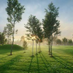 دانلود آرچ مدل 176 – مدل سه بعدی درخت