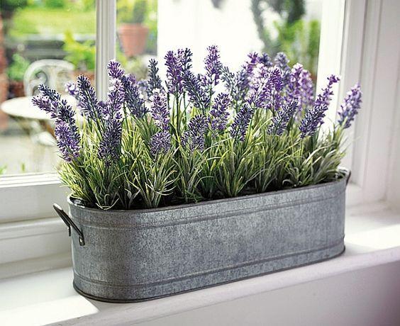 گیاه در طراحی داخلی