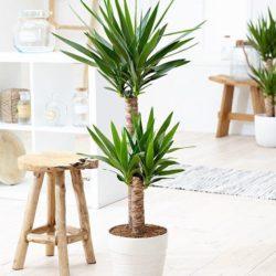 9 گیاه مناسب برای اتاق خواب