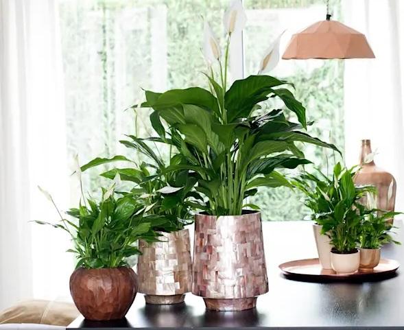 کاربرد گیاهان در کوراسیون داخلی