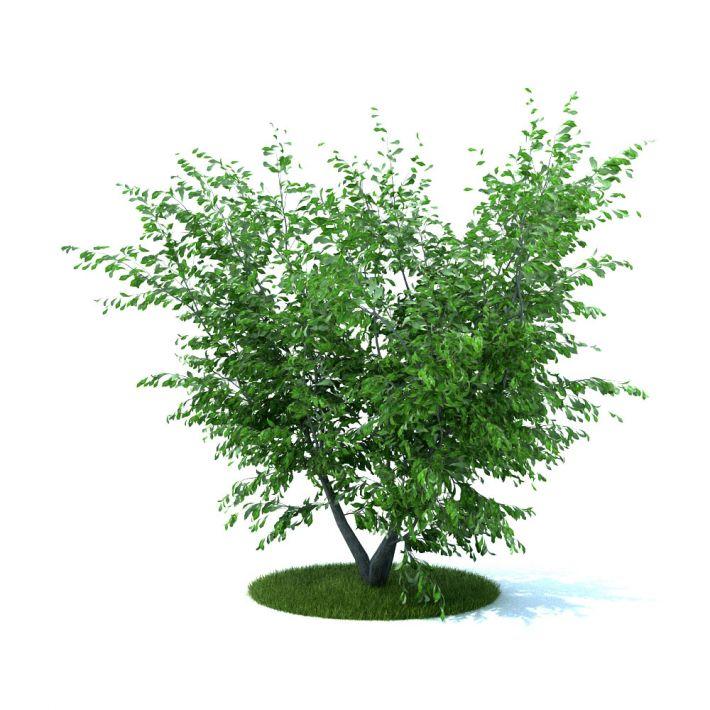 آبجکت درختچه