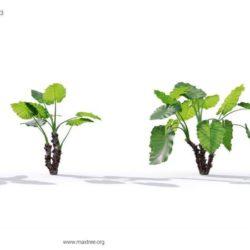 مدل سه بعدی گیاهان گلخانه ای و گلدانی