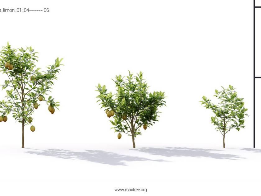 آبجکت گیاهان گلخانه