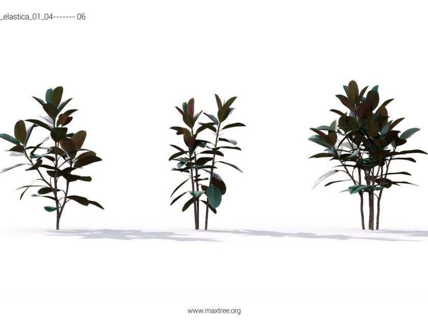 آبجکت گیاهان گلخانه ای