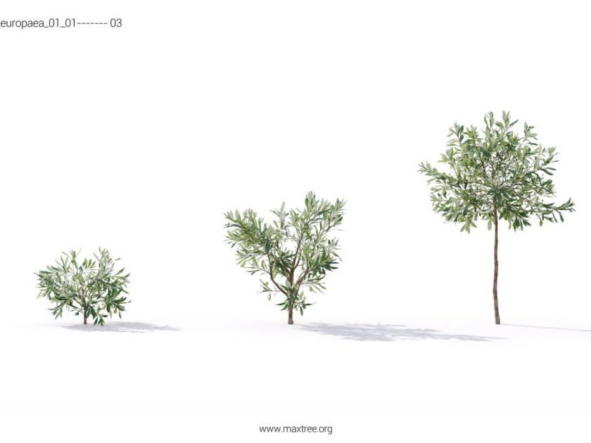 آبجکت درختچه زینتی