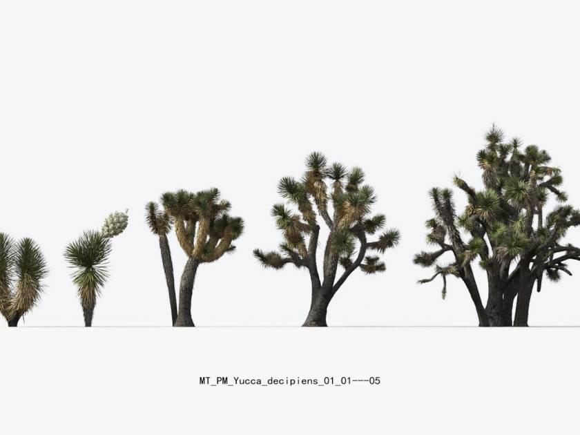 مدل سه بعدی گیاهان بیابانی